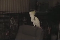 Yes... a dancing parrot!
